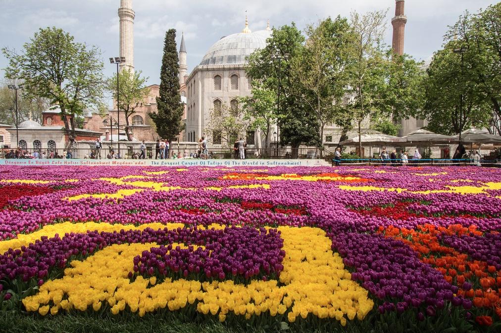 istanbul-tulip-festival