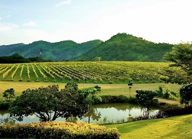 pb-valley-khao-yai-winery-khao-yai-park